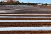 El paper de l'agricultura i la ramaderia durant l'estat d'alarma provocat pel coronavirus